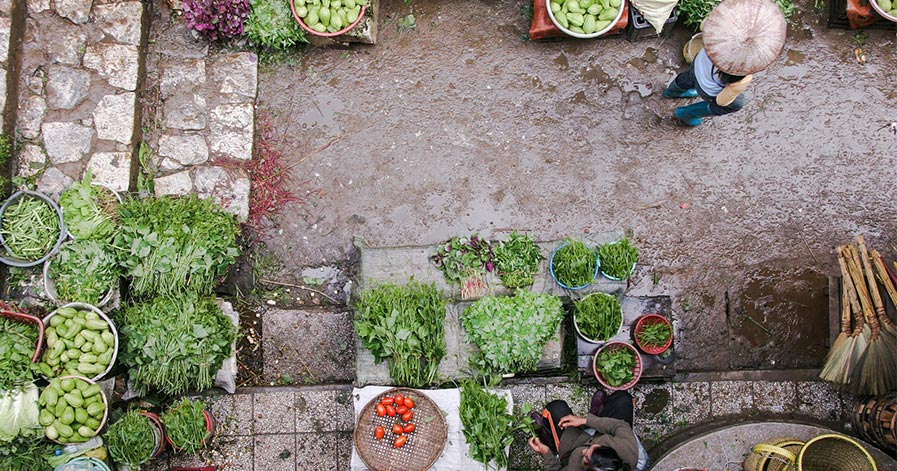 Overhead view of a backyard vegetable garden