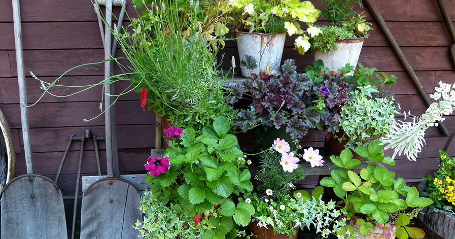 Flowers in pots and shovels