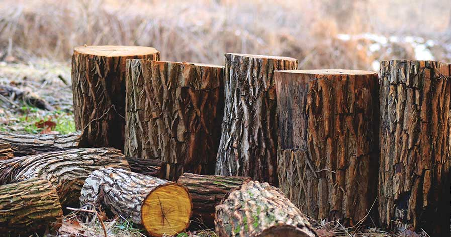 Logs upright on ground