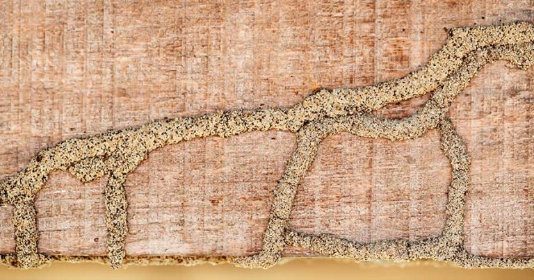 A termite mound on a wooden beam