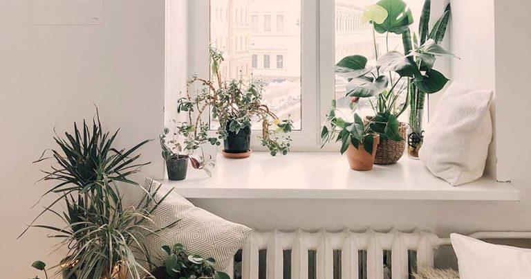 Plants sitting on a windowsill