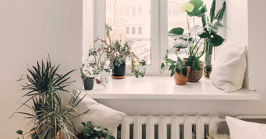 Plants sitting on a windowsill