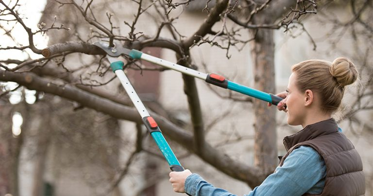 Woman pruning branches of a tree