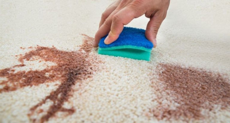 Someone is using a sponge to remove a carpet stain.